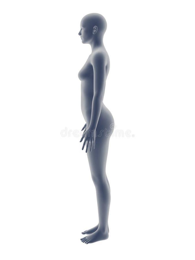 Carrocería de la mujer? con un detalle del sol stock de ilustración