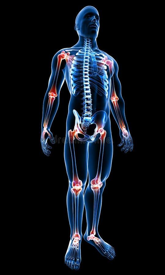 Cuerpo masculino con las juntas destacadas ilustración del vector