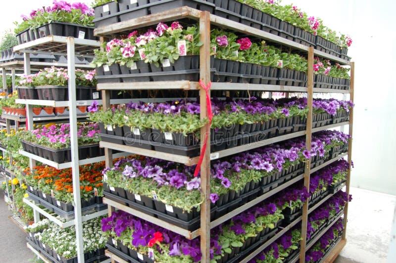 Carros da flor fotografia de stock