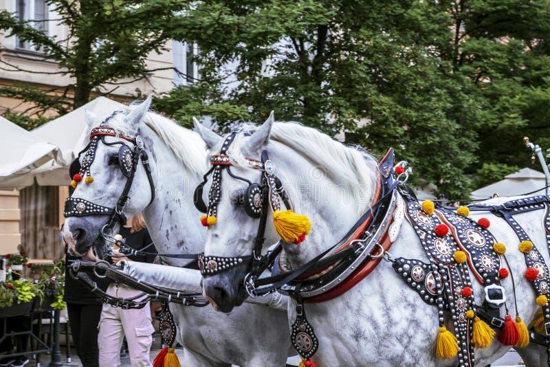 Carros de caballos decorados en la plaza principal de Cracovia en un día de verano, Polonia imagenes de archivo