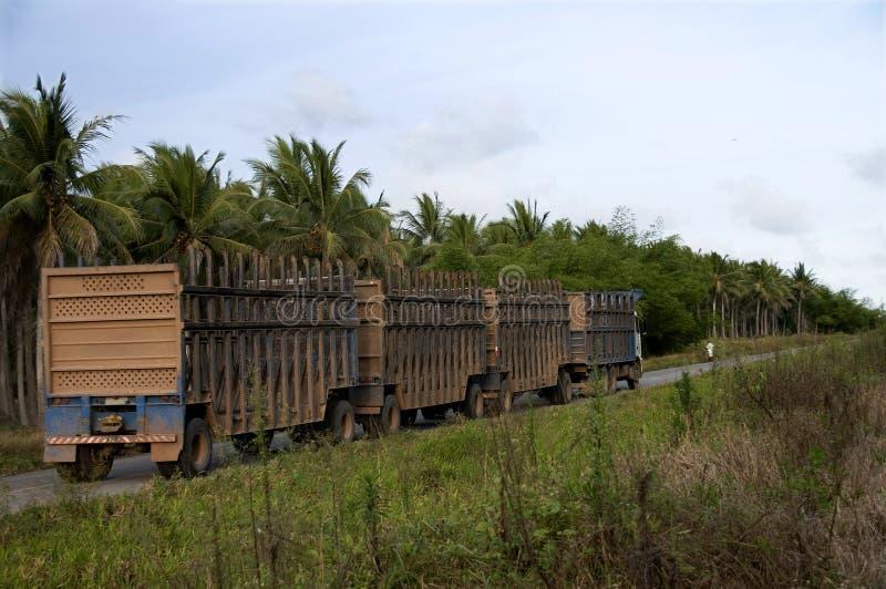 Carros para el transporte de la caña de azúcar fotos de archivo
