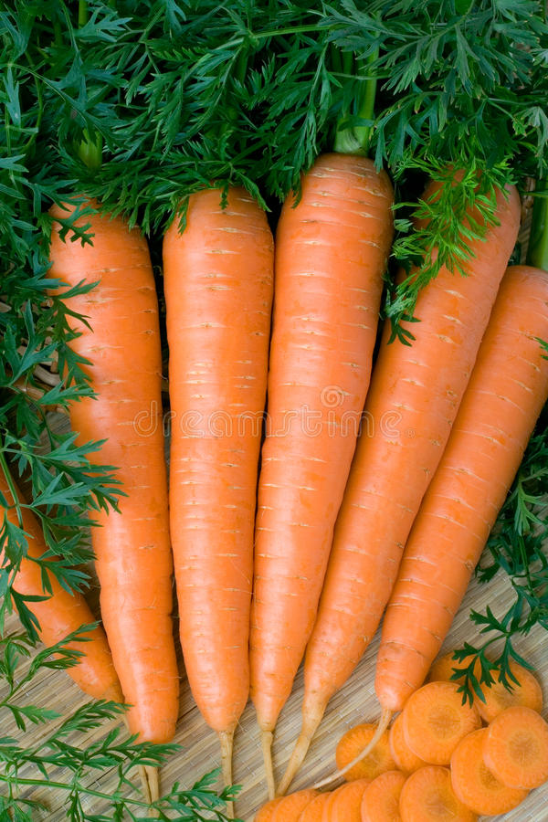 Carrot. Fresh carrots with plant tops stock image
