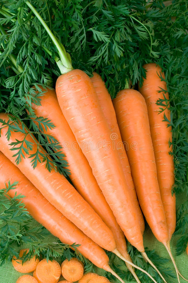 Carrot. Fresh carrots with plant tops stock photography