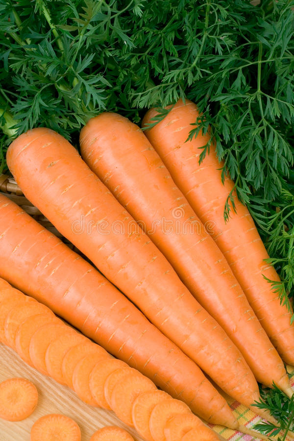 Download Carrot stock photo. Image of plant, root, fresh, agriculture - 14644746