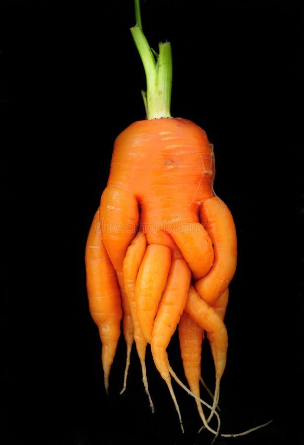 Carrot royalty free stock photo