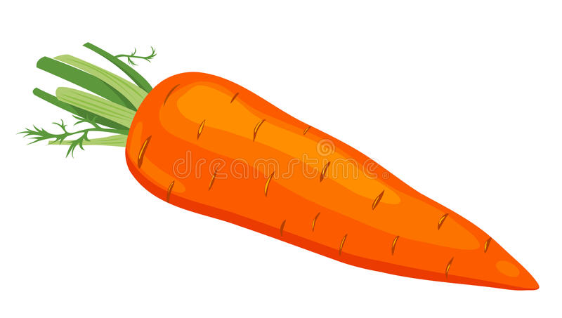 The carrot. vector illustration