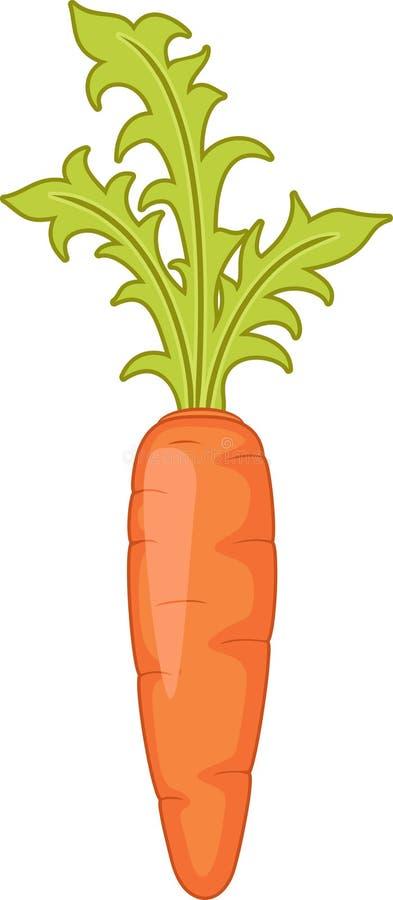 Carrot vector illustration