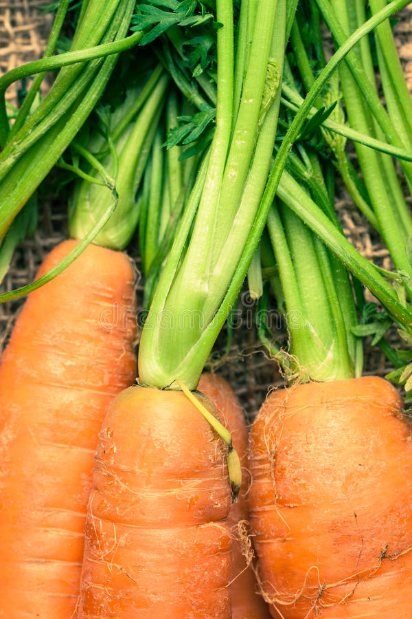 Download Carrot stock photo. Image of nutrition, cuisine, diet - 24400722