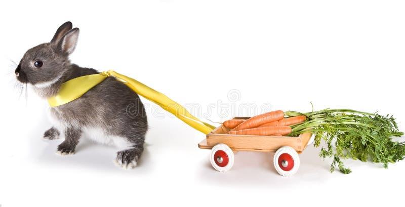 Carrot cart stock photo