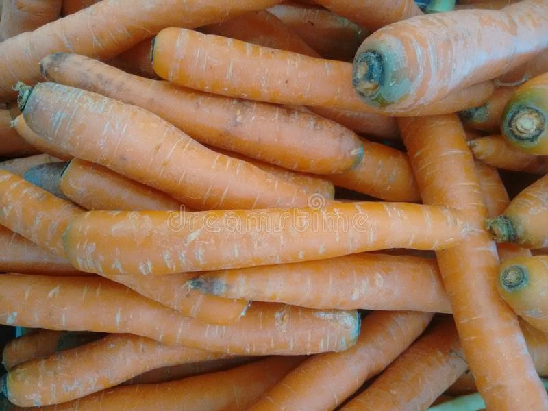 Carrot or common carrot royalty free stock photos