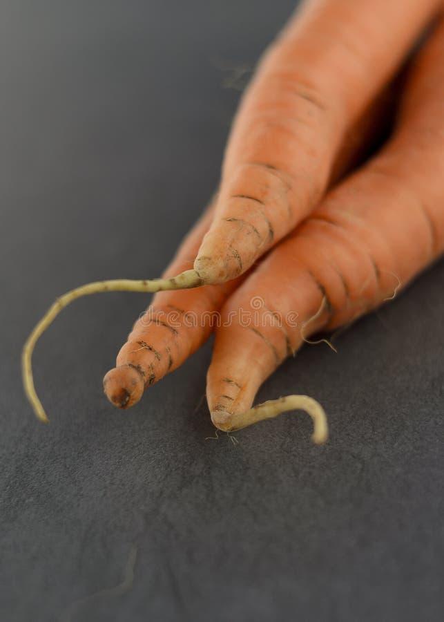 Carrot detail royalty free stock image