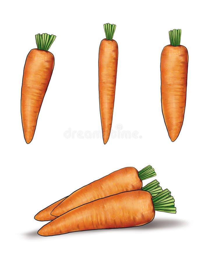 Carrot group on white. Set of carrot vegetable on white background, cut out. Still Life, Digital illustration. Clip art royalty free illustration