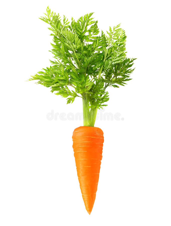 Carrot isolated. On white background royalty free stock photography
