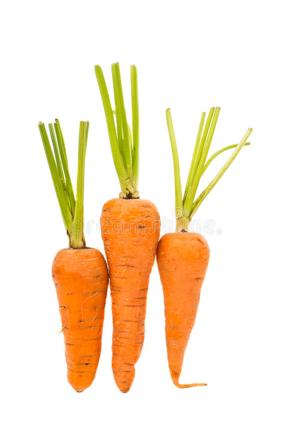 Carrot isolated. On a white background royalty free stock photography
