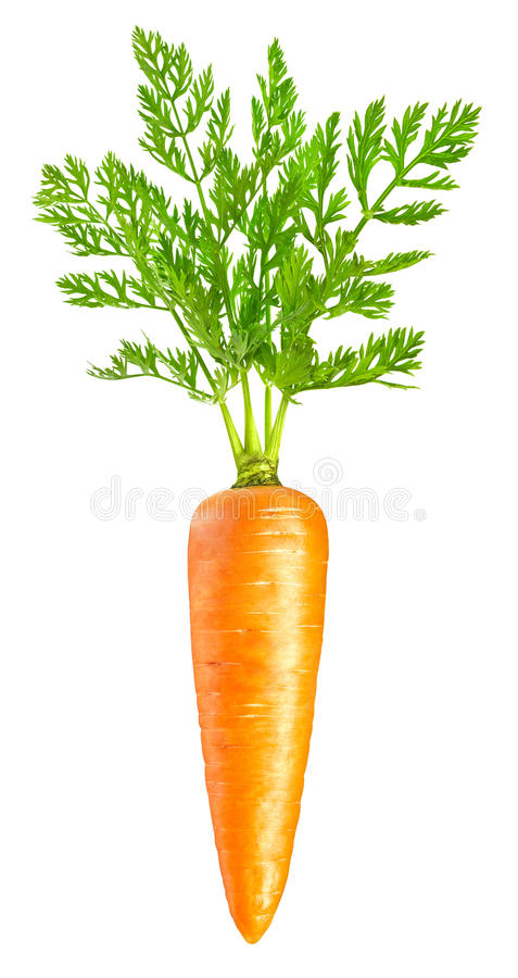 Carrot isolated on white. Background stock photos