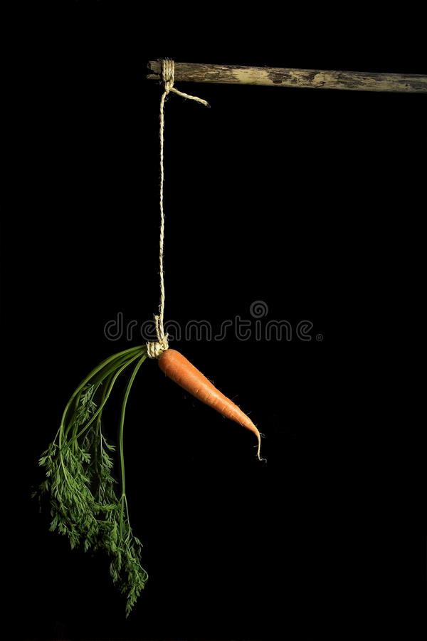 Carrot on a stick stock photo