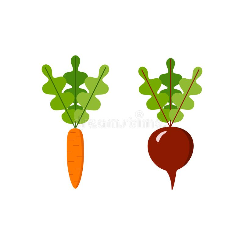 Carrot and sugar beetroot isolated on white background. set of vegetables. Carrot and sugar beet isolated on white background.vector illustration royalty free illustration