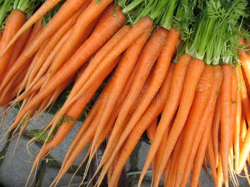 Download Carrots stock photo. Image of food, natural, green, juice - 4402
