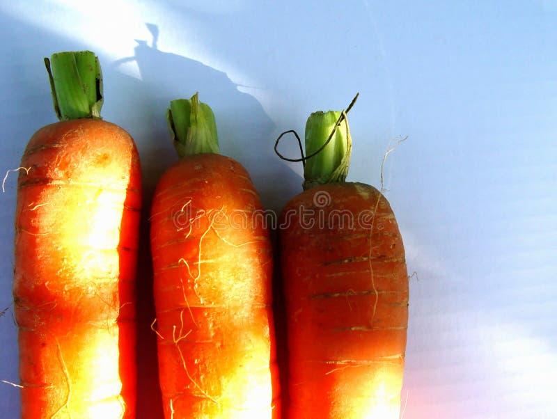 Download Carrots stock image. Image of light, orange, vegetable, vitamines - 10851