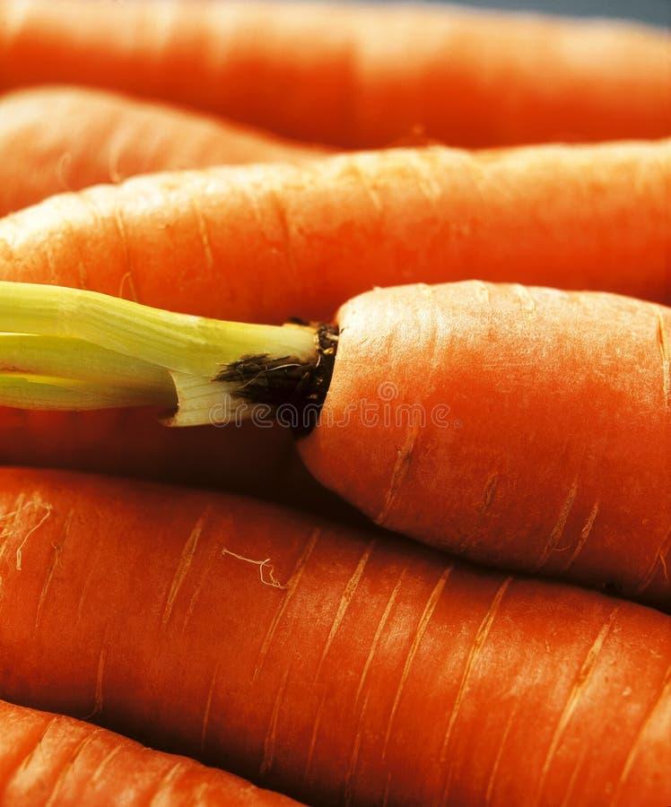Carrots royalty free stock photo