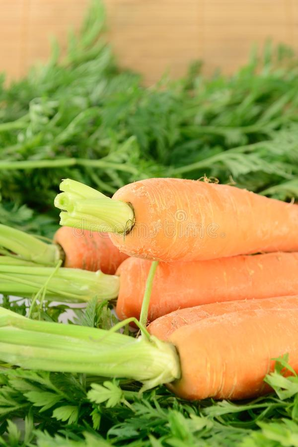 Carrots. Closeup of fresh carrots on green leaves royalty free stock photo
