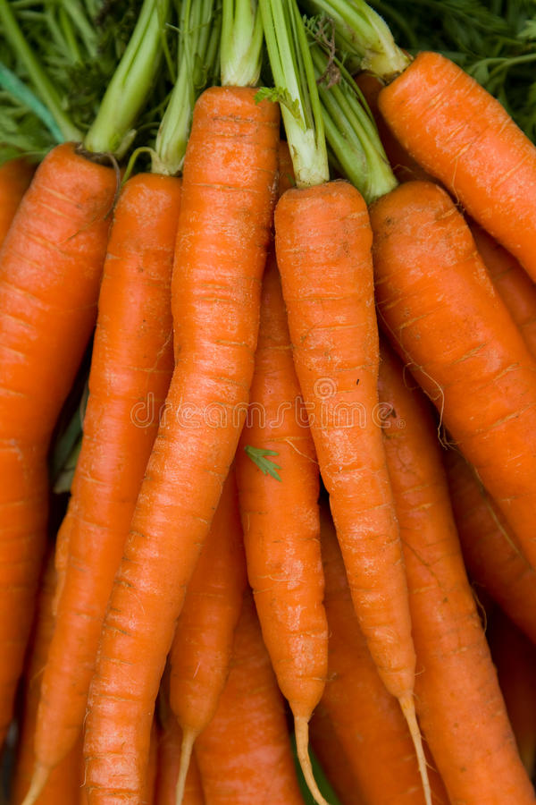 Download Carrots stock image. Image of plant, vitamins, carrot - 19154713
