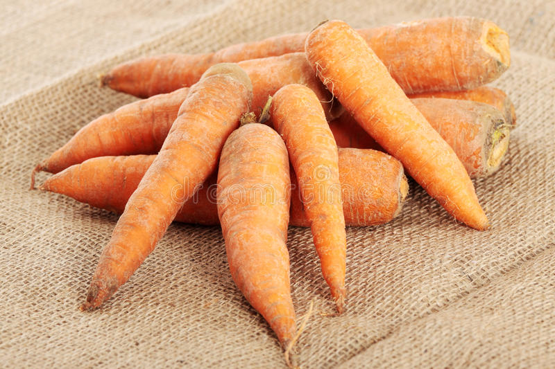 Carrots. Fresh ecologycal carrots (eco food concept royalty free stock images