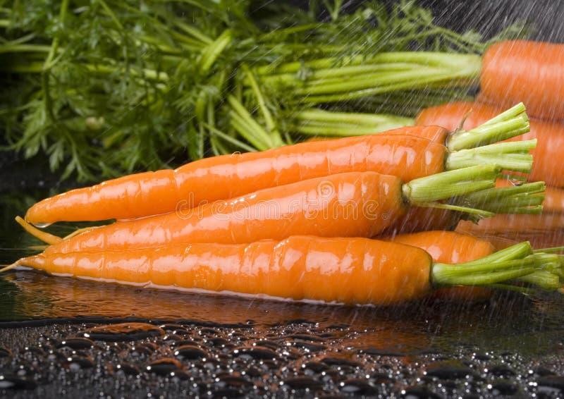 Download Carrots stock image. Image of freshness, food, ingridient - 2316745