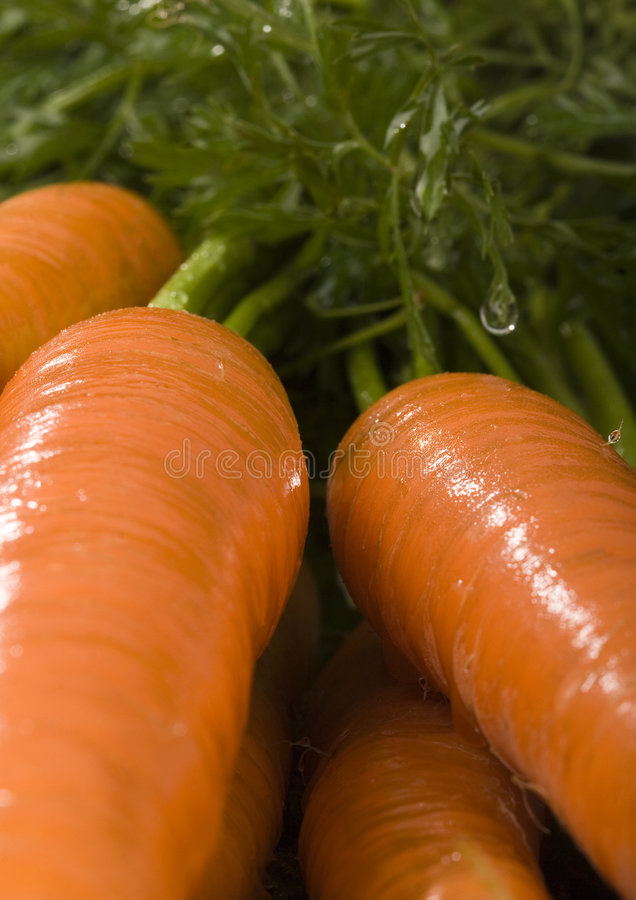 Download Carrots stock photo. Image of freshness, beauty, clean - 2317014