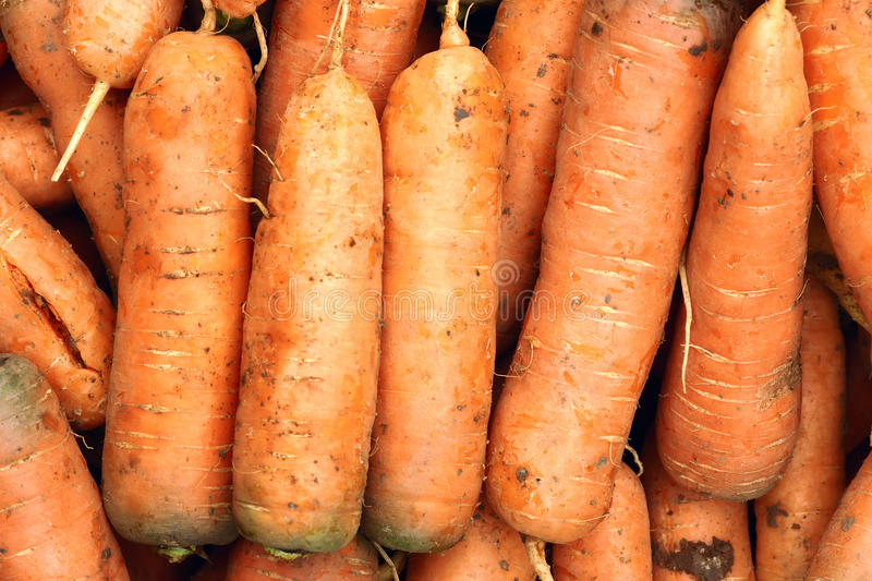 Download Carrots stock image. Image of close, carroty, carrot - 27328187