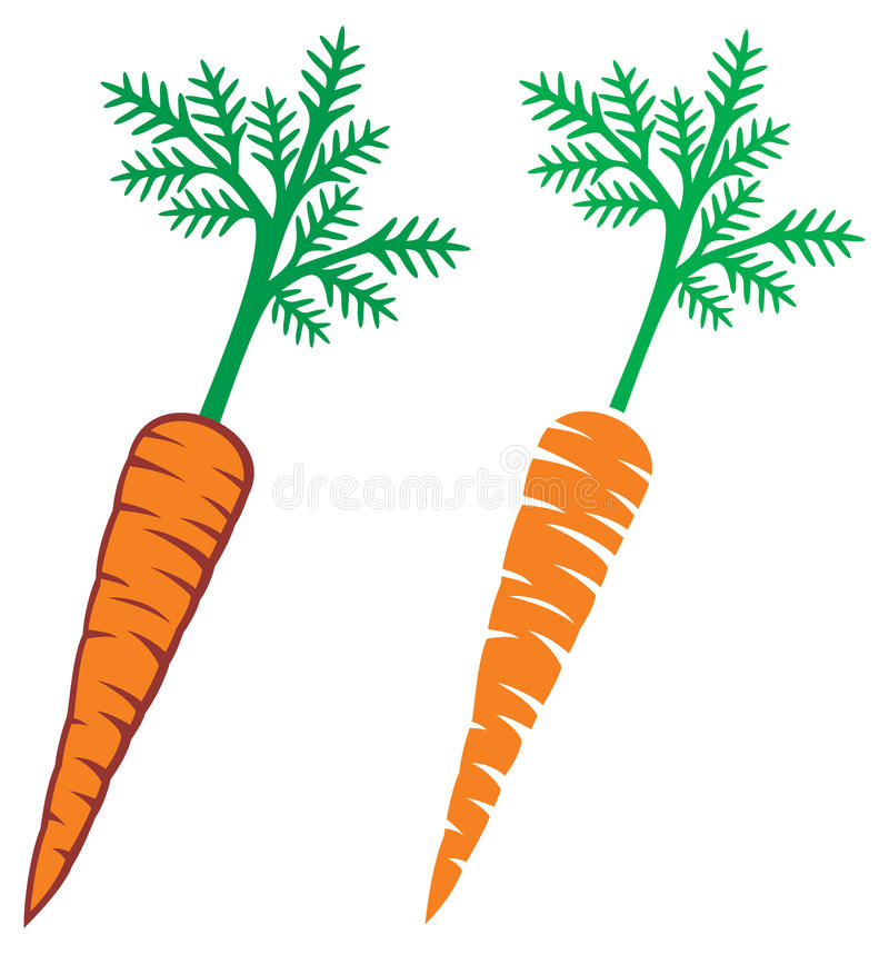 Download Carrots stock vector. Image of freshness, agriculture - 28205604