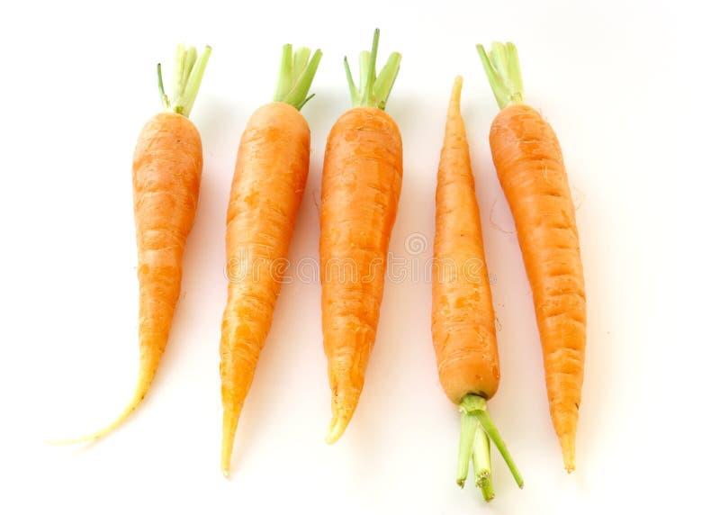 Carrots royalty free stock photos