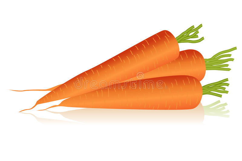 Carrots. Illustration of carrots over white