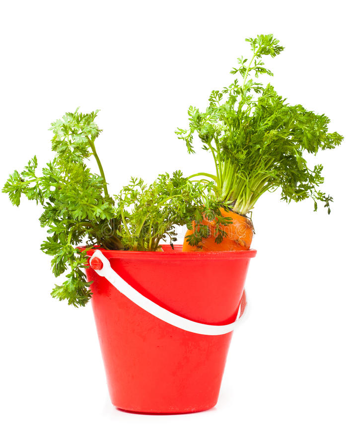 Download Carrots in the bucket stock image. Image of ingredients - 23399073