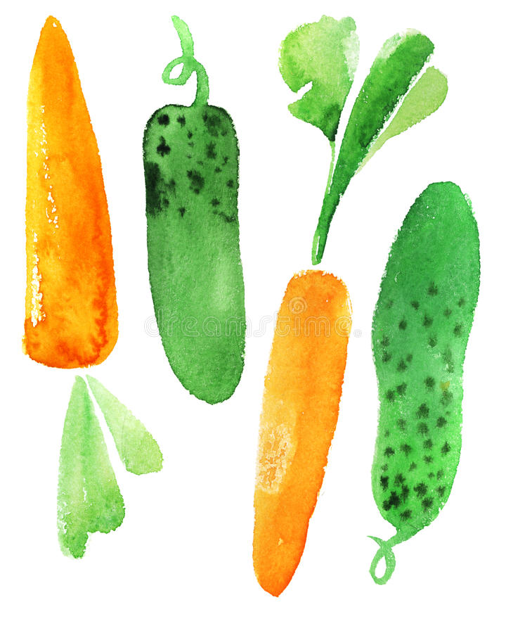 Carrots and cucumber. Watercolor illustration vector illustration