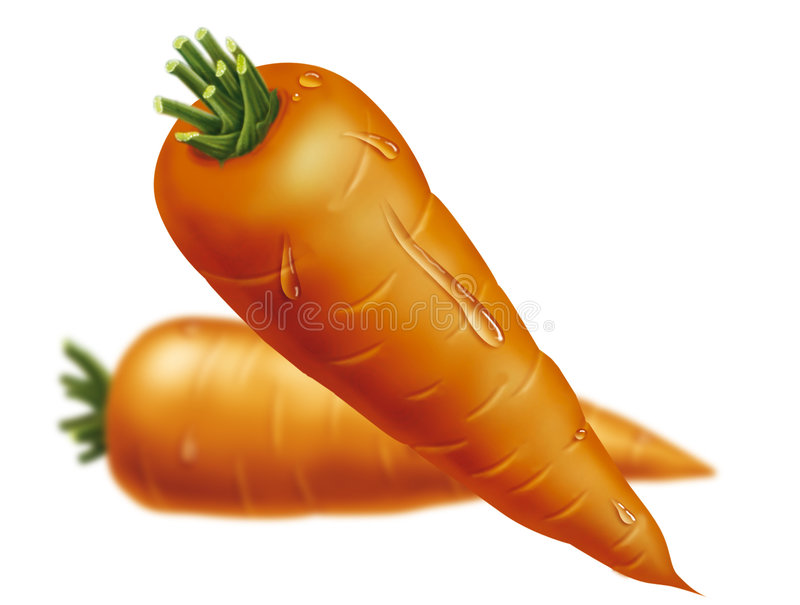 Carrots drawing stock photo
