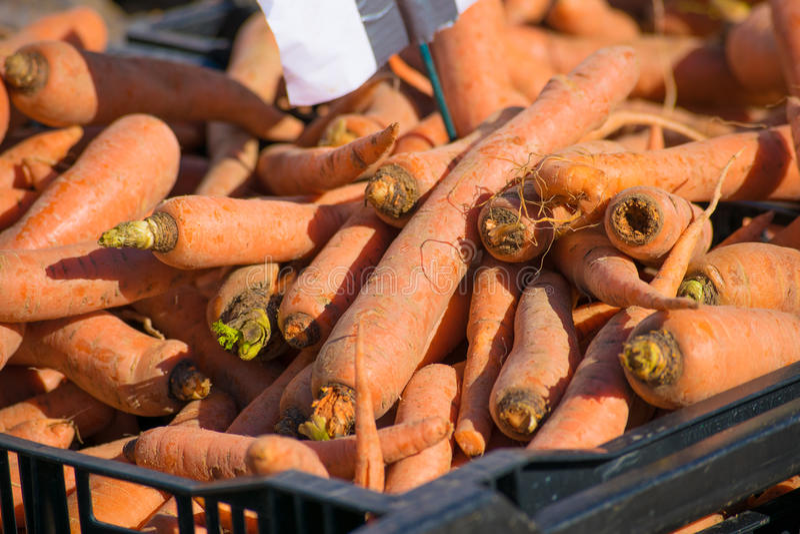 Carrots at the Farmer's Market royalty free stock image