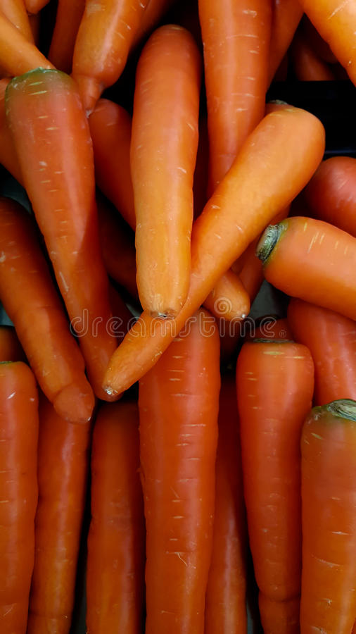 Carrots. Fresh organic carrots stock photography