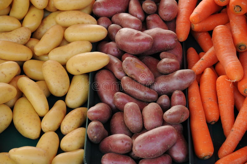 Carrots and potatoes stock image