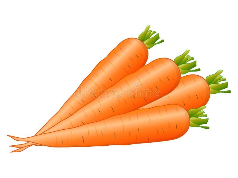 Carrots Vector Illustration stock illustration