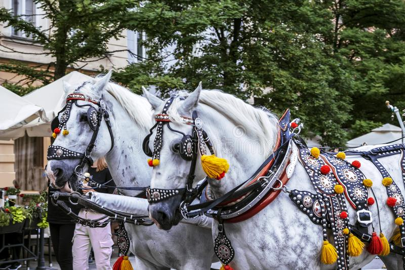 Carruagens de cavalo decoradas na praça principal em Cracóvia, num dia de Verão, Polônia imagens de stock