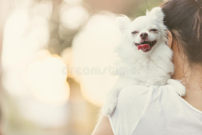 Carry dog stock images