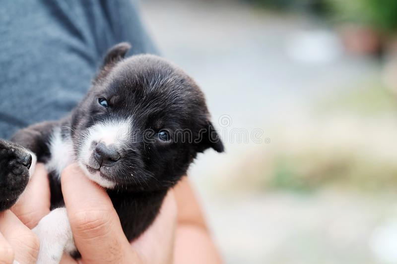 Carry poor black breed puppy of Thailand with human big hand. Have some space for write wording royalty free stock image