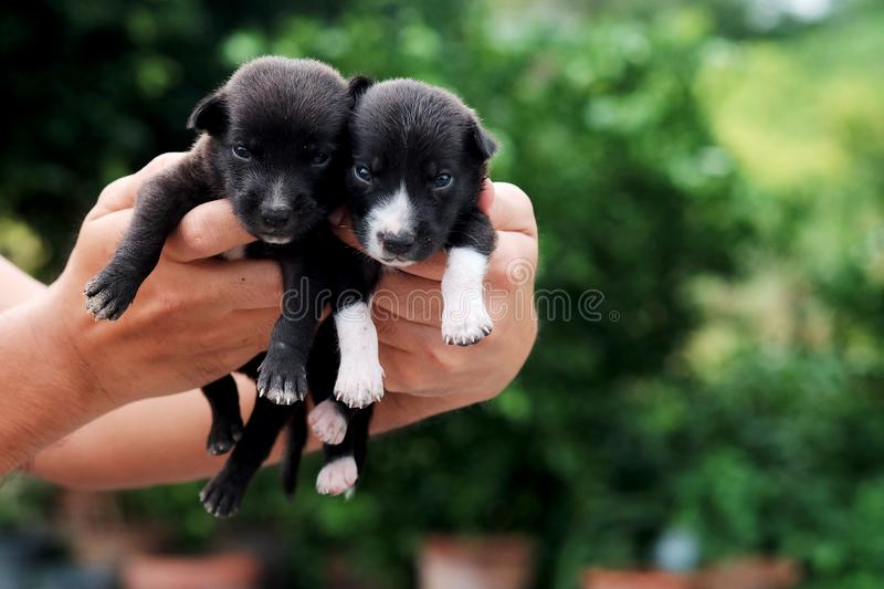 Carry poor black breed puppy of Thailand with human big hand. Have some space for write wording royalty free stock images