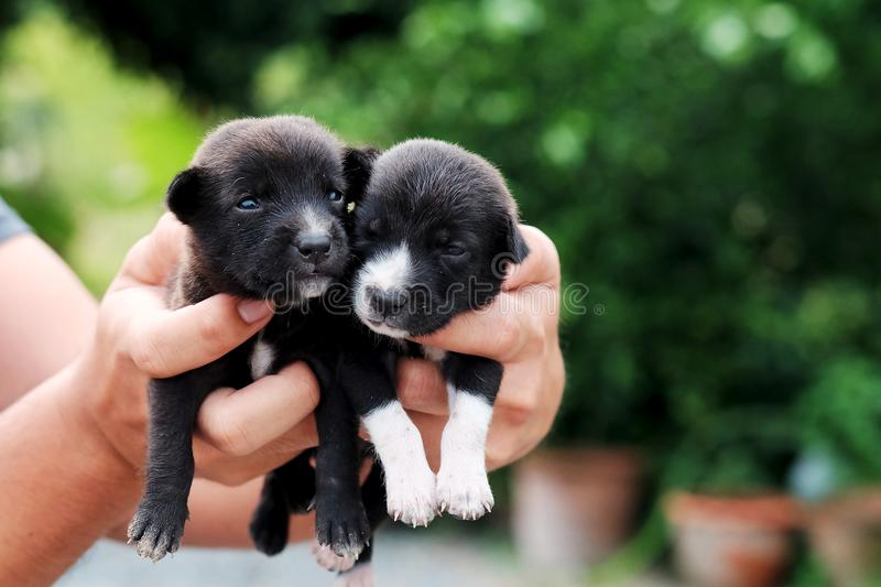 Carry poor black breed puppy of Thailand with human big hand. Have some space for write wording royalty free stock photos