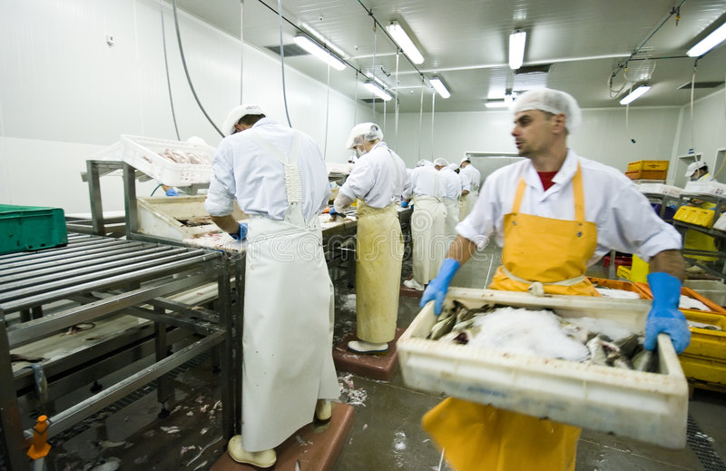 Carrying box of fish stock photography