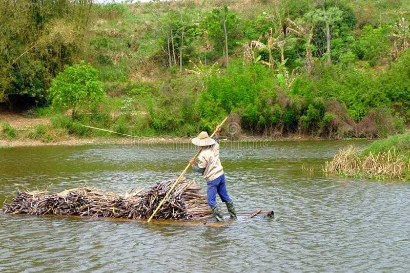 Carrying sugarcane by a bamboo raft royalty free stock image