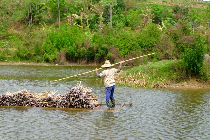 Carrying sugarcane by a bamboo raft stock photos