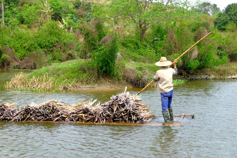 Carrying sugarcane by a bamboo raft stock image