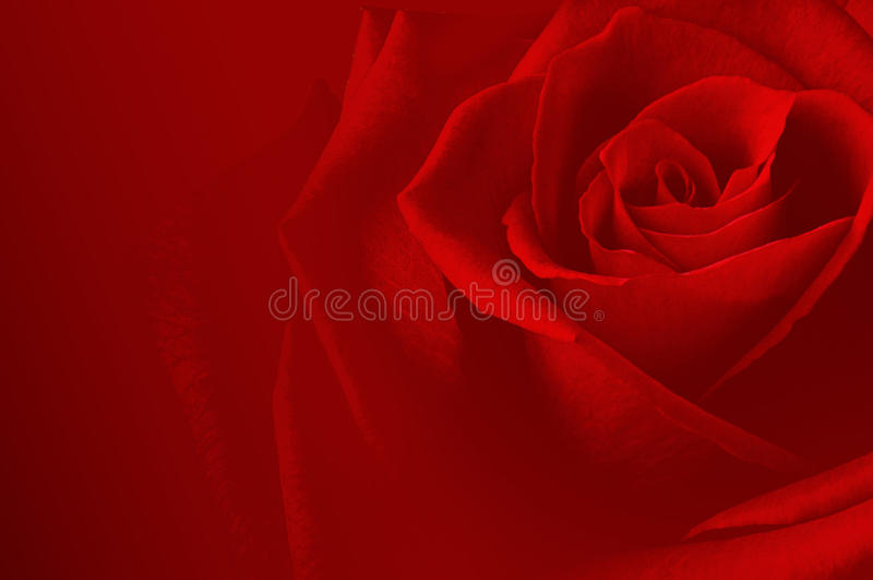 Carsd de Rose image stock